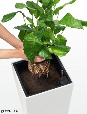 Pflanze einsetzen und Gefäß mit LECHUZA-PON oder Erde auffüllen.